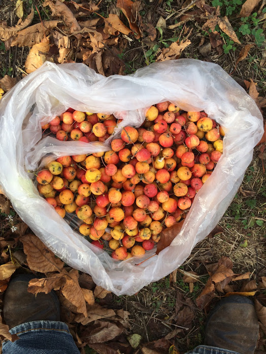 Crabapples that we found out at Dawn Farm. We made them into crabapple sauce, crabapple barbecue sauce, and some are infusing in vinegar for the next several weeks.